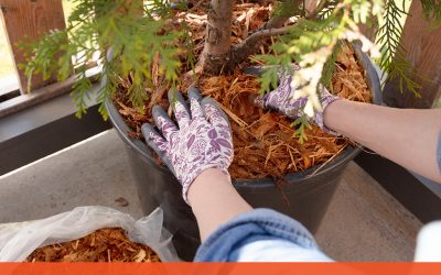 DIY Mulch Is Easier Than You Think